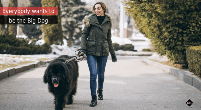 Lady walking a big dog